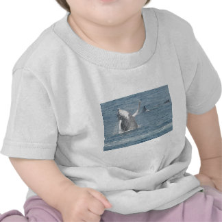 Infracción del becerro camisetas
