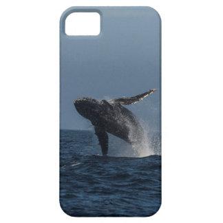 Infracción para los regalos de la ballena jorobada iPhone 5 carcasa