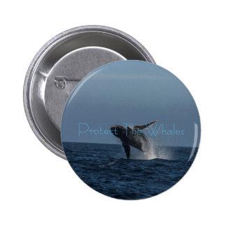 Infracción para los regalos de la ballena jorobada pins