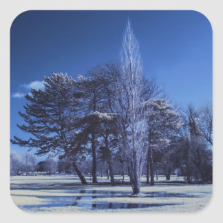 Infrared Landscape - Trees in a Park Square Sticker