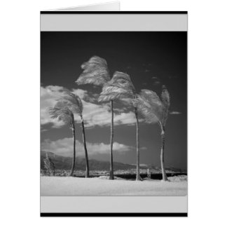 Infrared Palms Greeting Card