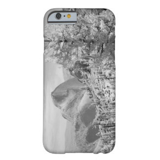 Infrared photo in East side of Yosemite National 2 Barely There iPhone 6 Case