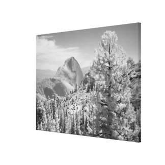 Infrared photo in East side of Yosemite National 2 Stretched Canvas Print