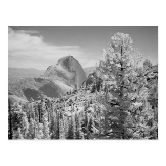 Infrared photo in East side of Yosemite National 2 Postcard