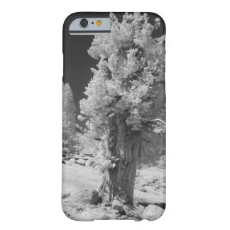Infrared photo in East side of Yosemite National Barely There iPhone 6 Case