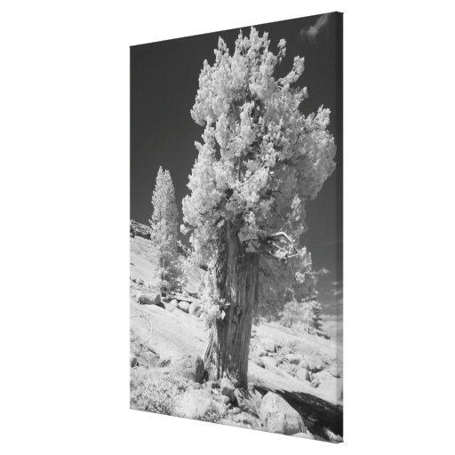 Infrared photo in East side of Yosemite National Canvas Print