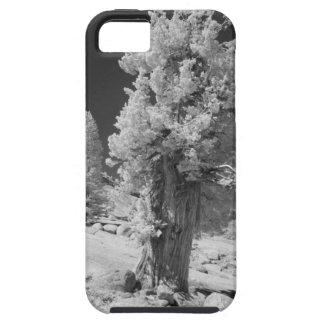 Infrared photo in East side of Yosemite National iPhone SE/5/5s Case