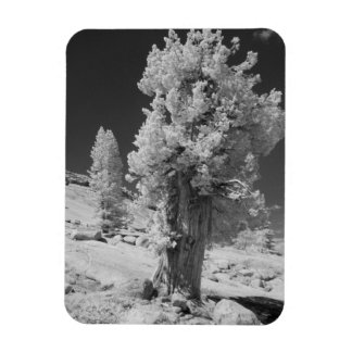 Infrared photo in East side of Yosemite National Magnet