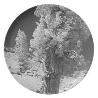 Infrared photo in East side of Yosemite National Dinner Plate