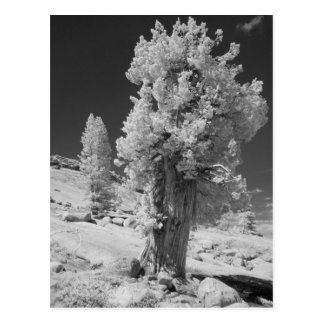 Infrared photo in East side of Yosemite National Postcard