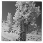 Infrared photo in East side of Yosemite National Tile