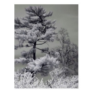 Infrared Trees Postcard