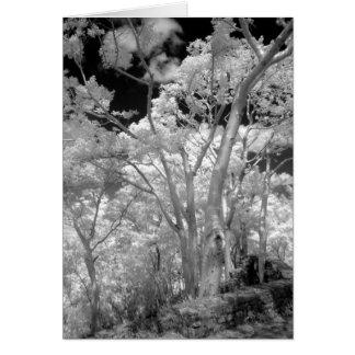 Infrarrojo de edificios y de rastros de los árbole tarjeta