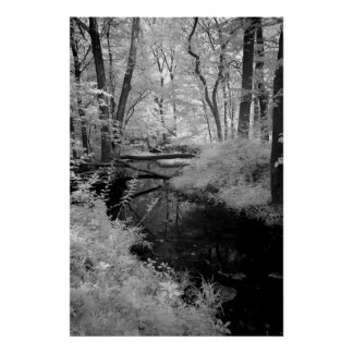 Infrarrojo del arroyo del bosque póster