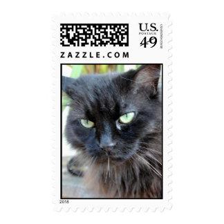 Inga el gato negro envio