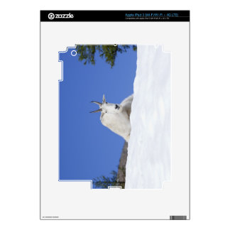Ingalls Lake area, Billy Goat on snow iPad 3 Decals
