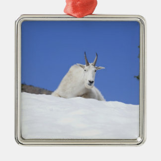 Ingalls Lake area, Billy Goat on snow Metal Ornament