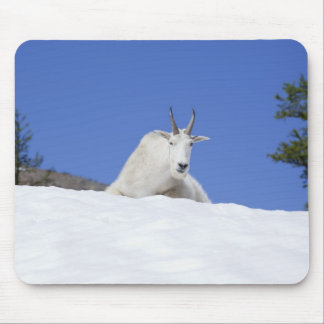Ingalls Lake area, Billy Goat on snow Mouse Pad