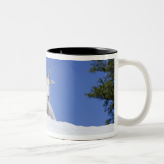 Ingalls Lake area, Billy Goat on snow Two-Tone Coffee Mug