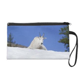 Ingalls Lake area, Billy Goat on snow Wristlet Purse