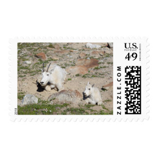 Ingalls Lake area, Nanny goat and kid Postage Stamp