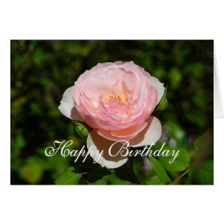 Inglés del rosa del feliz cumpleaños subió felicitación