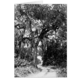 Ingraham Highway, Florida Everglades, 1929 Card