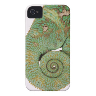 Inhabits dry mountainous areas. Indigenous iPhone 4 Case-Mate Cases