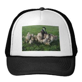 Ink Cap Fungi Trucker Hat