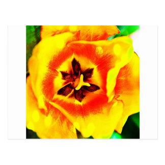 Innards del tulipán postal
