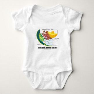 Innards operativo revelador (biología celular) body para bebé
