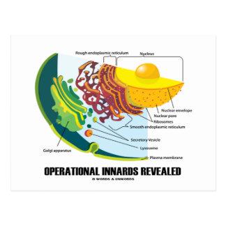 Innards operativo revelador (biología celular) tarjeta postal