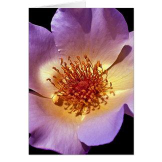 Inner Glow Vibrant Violet Blossom Card