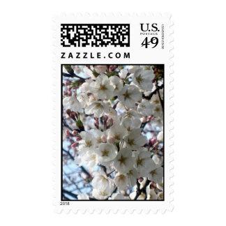Innocence (1) Postage Stamps