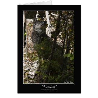 INNOCENCE Grey Wolf Note Cards & Greeting Cards