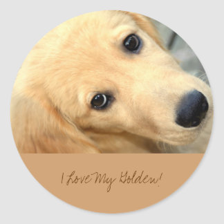 Innocent Abby - I Love My Golden Sticker