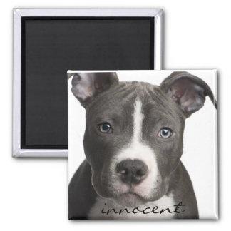 Innocent Pitbull Puppy Magnet