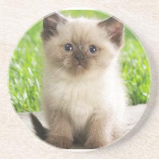 Innocent Ragdoll Kitten Sandstone Coaster