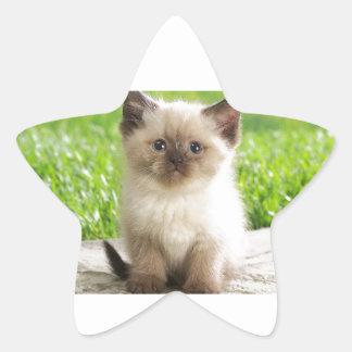 Innocent Ragdoll Kitten Star Sticker