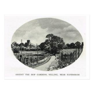 Inns of Kent, Kentish Hop garden Postcard