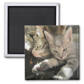 Inoki Kitten 2 Inch Square Magnet