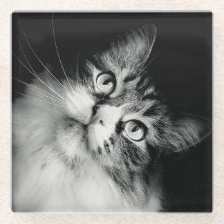 Inquisitive Cat Expression Glass Coaster