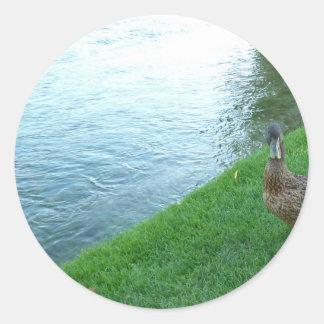 Inquisitive Duck Classic Round Sticker