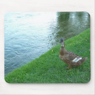 Inquisitive Duck Mouse Pad