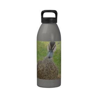 Inquisitive Duck Drinking Bottle