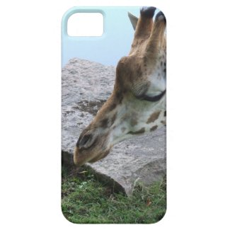 Inquisitive Giraffe iPhone 5 Cover