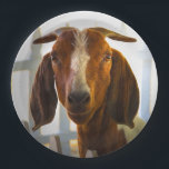 "Inquisitive Goat Asks Questions Paper Plate<br><div class=""desc"">Inquisitive Goat Asks Questions is a photograph of a goat looking right at us and asking ""What are you looking at now?"" So uppity.</div>"
