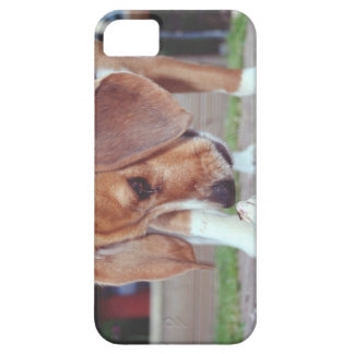inquisitive iPhone 5 cover
