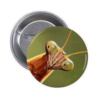 Inquisitive Mantis Pinback Button