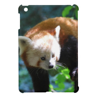 Inquisitive Red Panda Bear Case For The iPad Mini